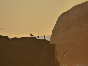 gulls on a cliff